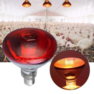 Infrared brooder lamp 250W